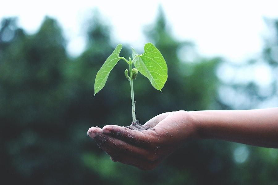 kleine Pflanze in Hand haltend